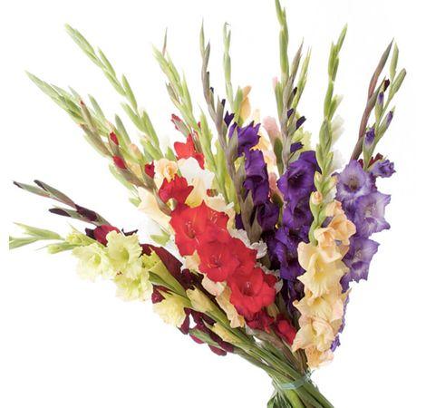 Букет из 21 гладиолуса. Superflowers.com.ua